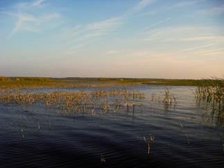 west lake toho tohopekaliga florida fishing guide