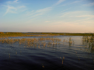 Haulin bass guide service destinations stick marsh for Lake toho fishing guides